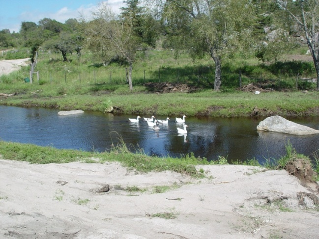 ARROYO CON PATOS